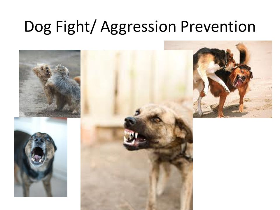 Dog Fight/ Aggression Prevention