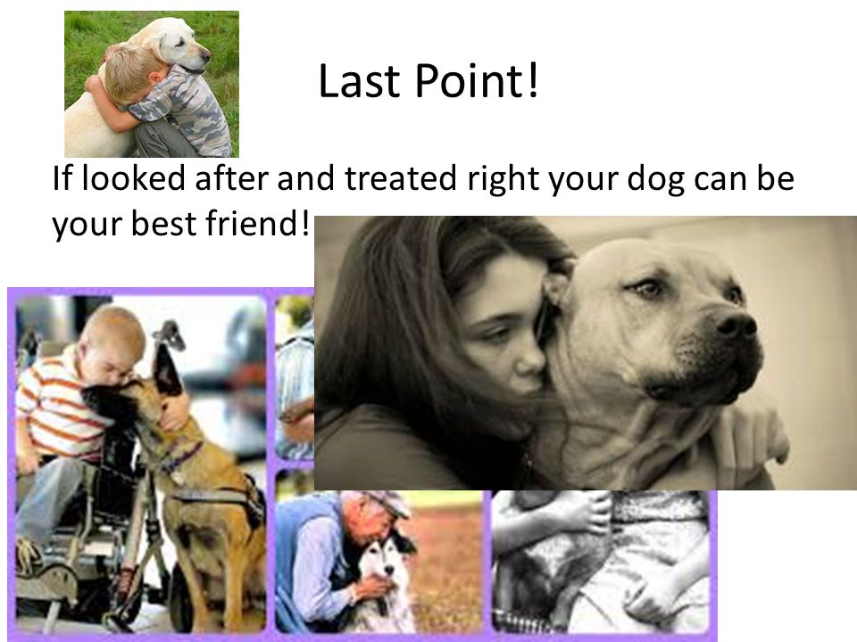 Last Point! If looked after and treated right your dog can be your best friend!