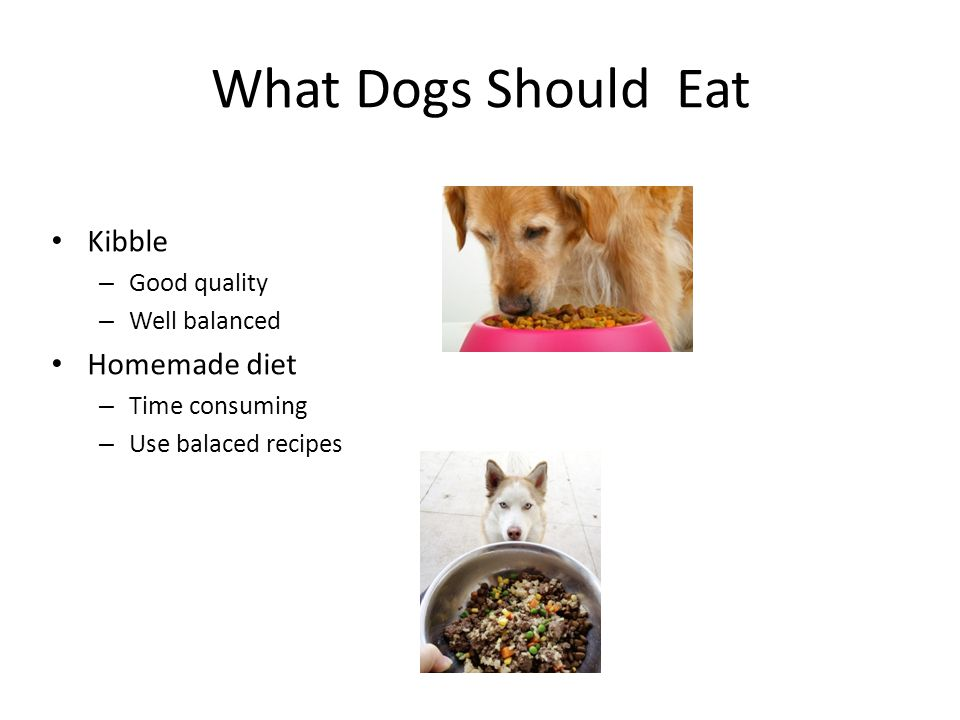What Dogs Should Eat Kibble – Good quality – Well balanced Homemade diet – Time consuming – Use balaced recipes