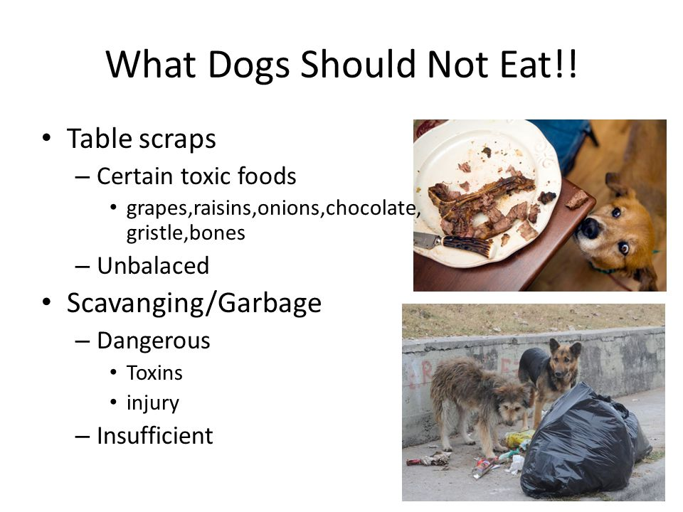 What Dogs Should Not Eat!.