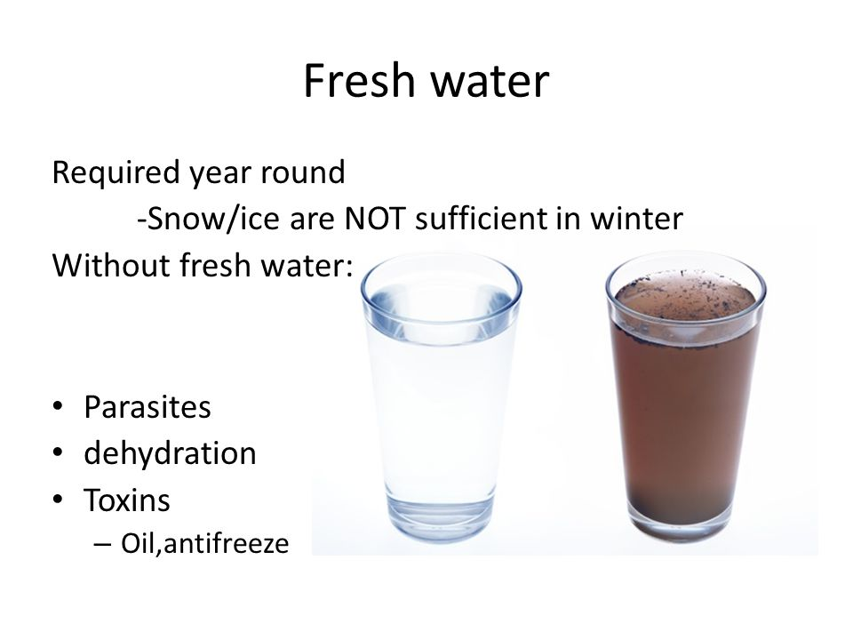 Fresh water Required year round -Snow/ice are NOT sufficient in winter Without fresh water: Parasites dehydration Toxins – Oil,antifreeze