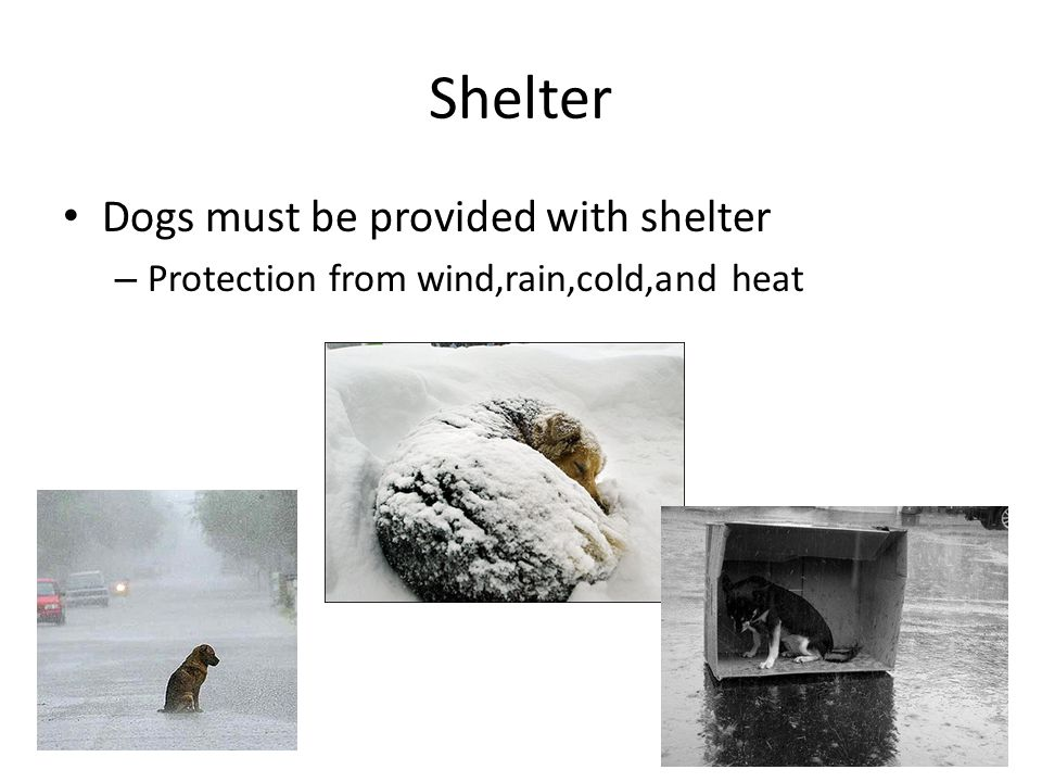 Shelter Dogs must be provided with shelter – Protection from wind,rain,cold,and heat