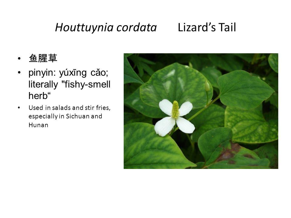 Houttuynia cordata Lizards Tail pinyin: yúxīng cǎo; literally