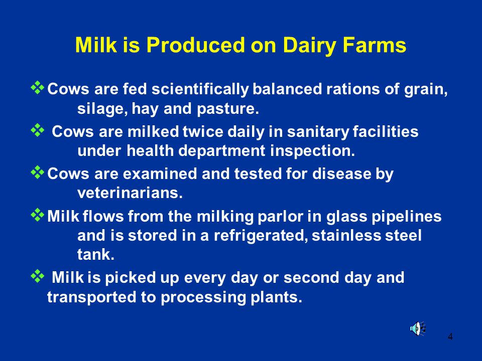 4 Milk is Produced on Dairy Farms Cows are fed scientifically balanced rations of grain, silage, hay and pasture. Cows are milked twice daily in sanit