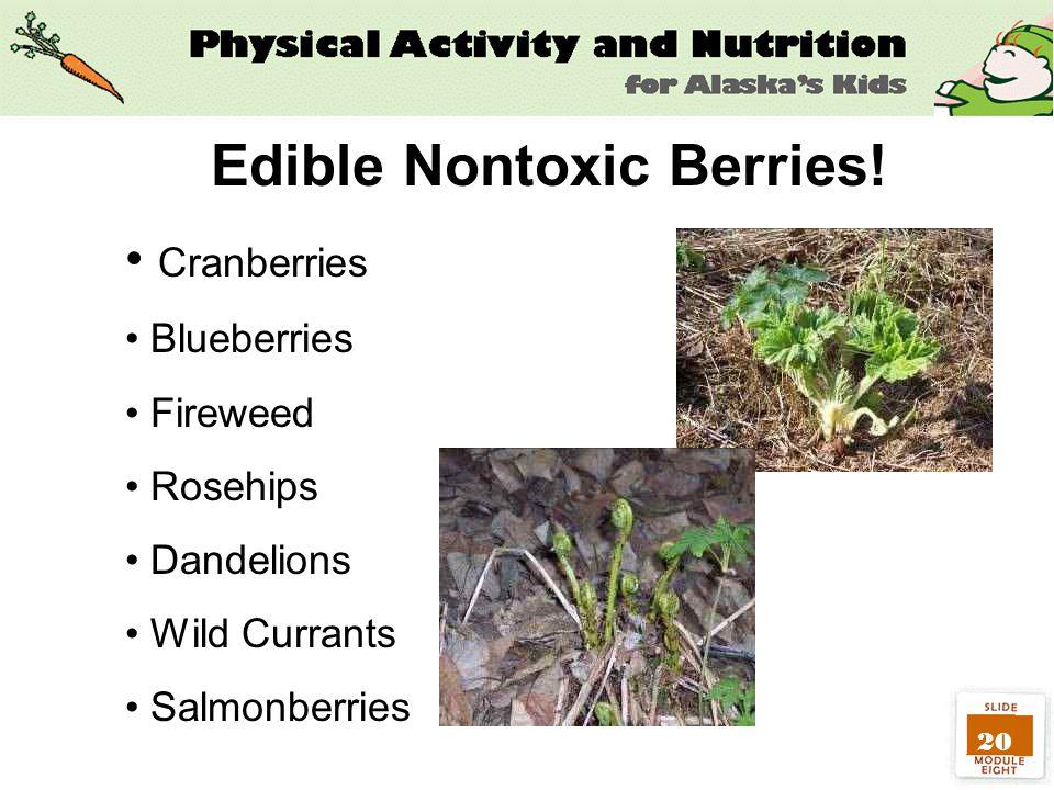 20 Cranberries Blueberries Fireweed Rosehips Dandelions Wild Currants Salmonberries Edible Nontoxic Berries!
