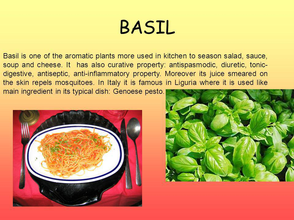 BASIL Basil is one of the aromatic plants more used in kitchen to season salad, sauce, soup and cheese.