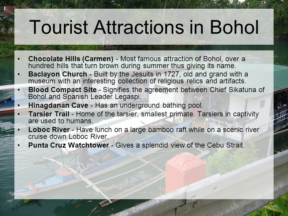 Tourist Attractions in Bohol Chocolate Hills (Carmen) - Most famous attraction of Bohol, over a hundred hills that turn brown during summer thus giving its name.