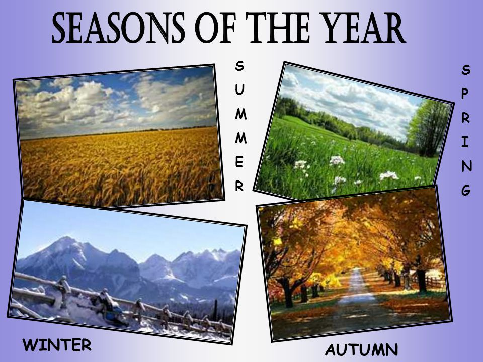 SUMMERSUMMER WINTER AUTUMN SPRINGSPRING