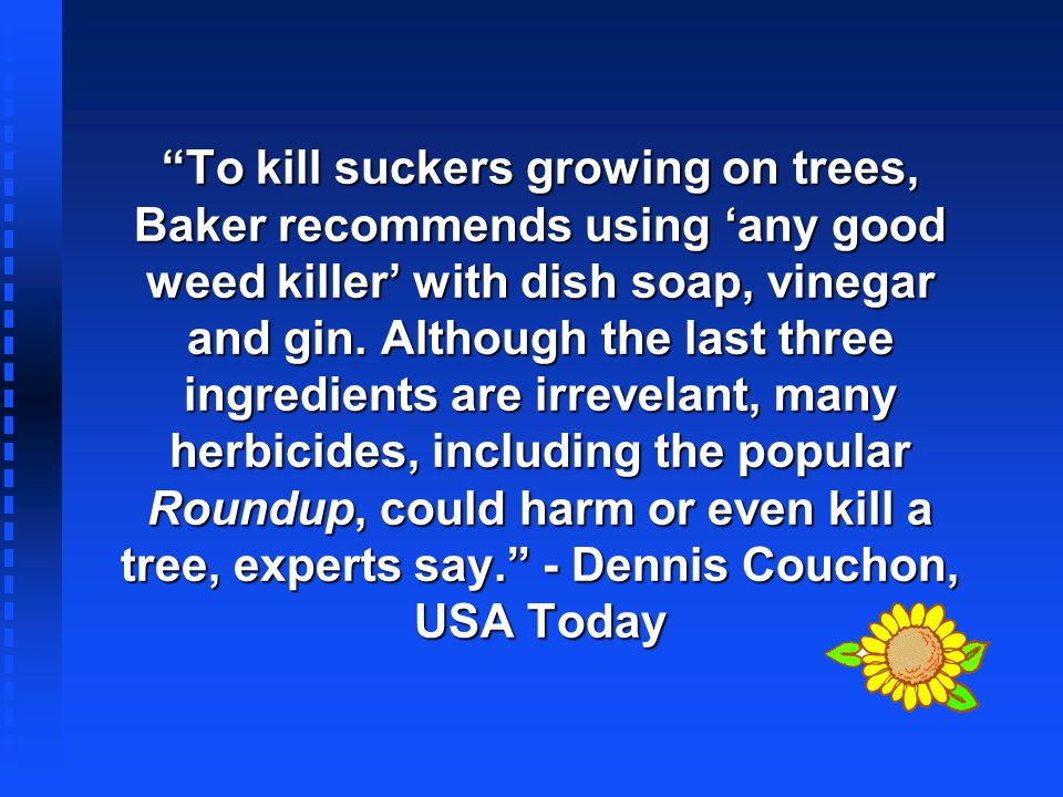To kill suckers growing on trees, Baker recommends using any good weed killer with dish soap, vinegar and gin. Although the last three ingredients are