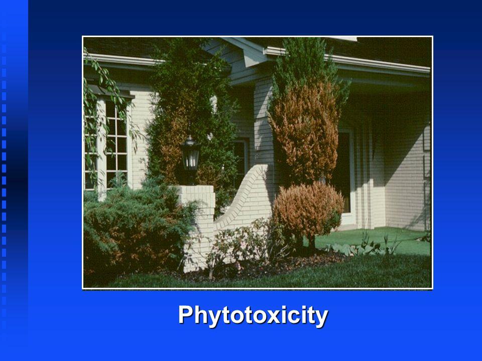 Phytotoxicity