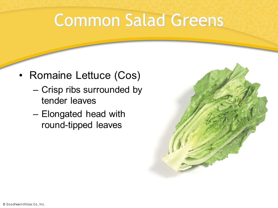 © Goodheart-Willcox Co., Inc. Common Salad Greens Romaine Lettuce (Cos) –Crisp ribs surrounded by tender leaves –Elongated head with round-tipped leav