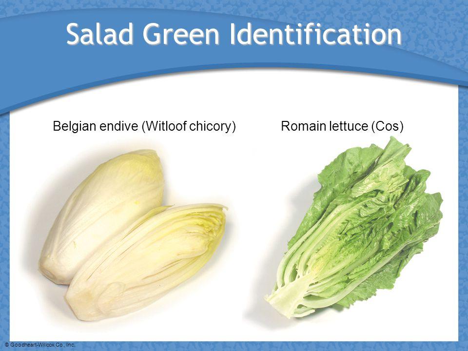 © Goodheart-Willcox Co., Inc. Salad Green Identification Belgian endive (Witloof chicory)Romain lettuce (Cos)
