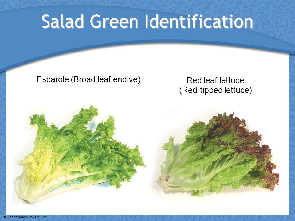 © Goodheart-Willcox Co., Inc. Salad Green Identification Escarole (Broad leaf endive) Red leaf lettuce (Red-tipped lettuce)