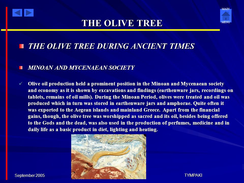 MAIN MENU September 2005 TYMPAKI THE OLIVE TREE Greece is full of olive groves. The Olive Tree,