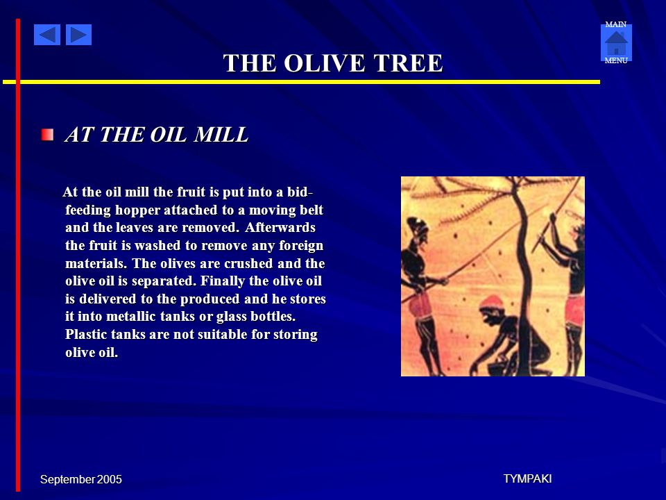 MAIN MENU September 2005 TYMPAKI THE OLIVE TREE OLIVE HARVEST Due to its mild climate, Crete is an ideal place for the development of olive trees and