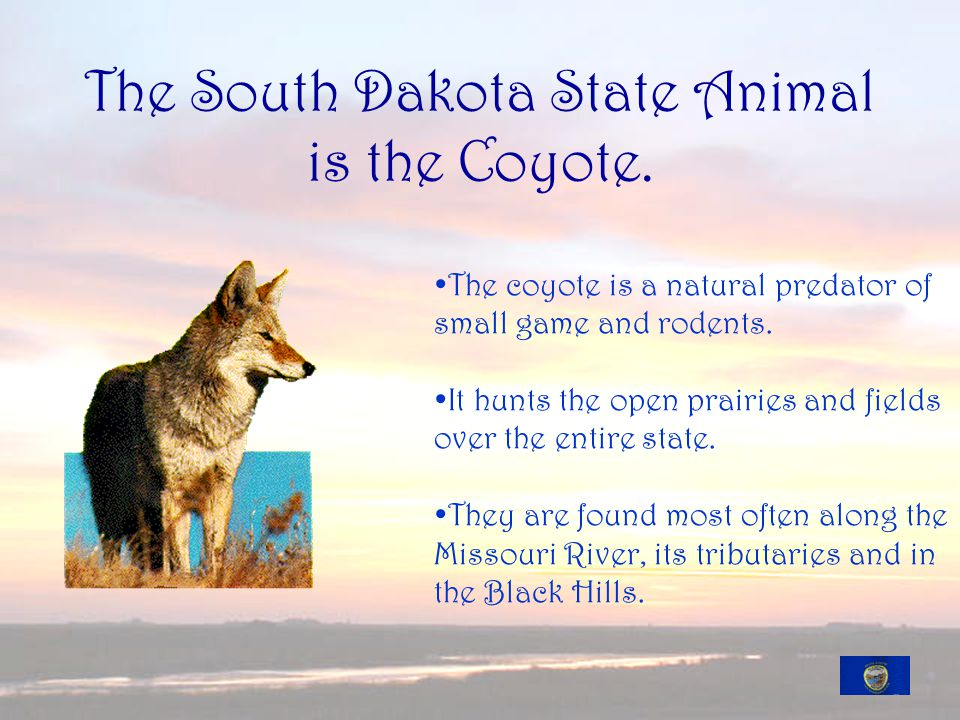 The South Dakota State Animal is the Coyote.
