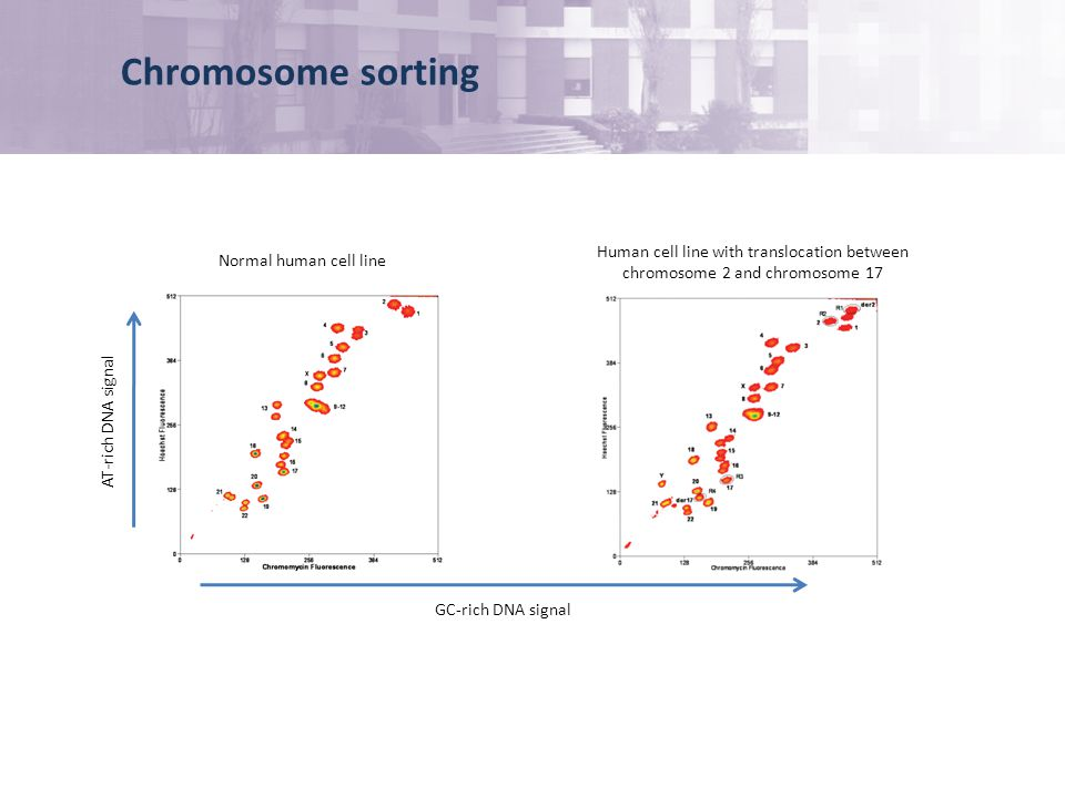 Chromosome sorting Human cell line with translocation between chromosome 2 and chromosome 17 Normal human cell line GC-rich DNA signal AT-rich DNA signal