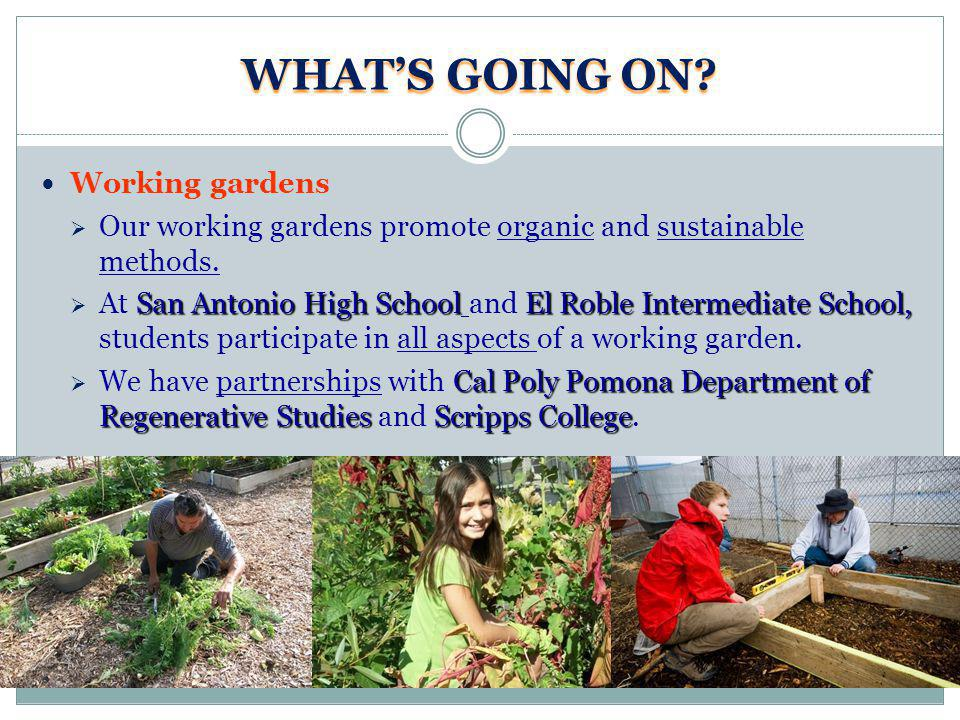 WHATS GOING ON? Working gardens Our working gardens promote organic and sustainable methods. San Antonio High SchoolEl Roble Intermediate School, At S
