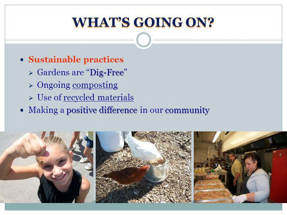 WHATS GOING ON? Sustainable practices Dig-Free Gardens are Dig-Free Ongoing composting Use of recycled materials positive difference community Making
