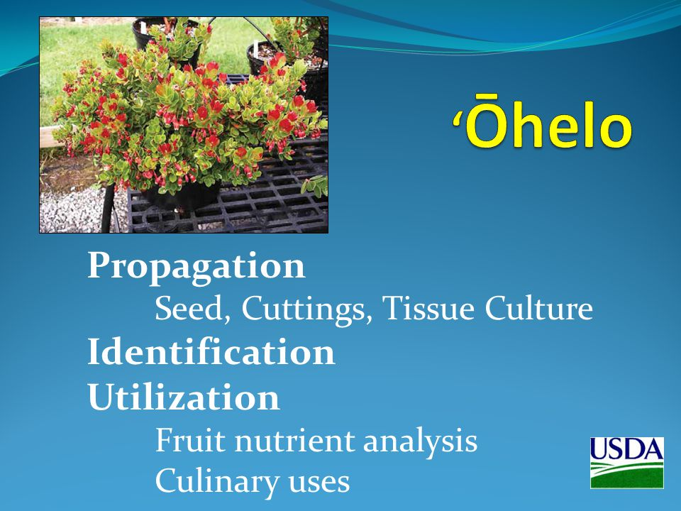Propagation Seed, Cuttings, Tissue Culture Identification Utilization Fruit nutrient analysis Culinary uses