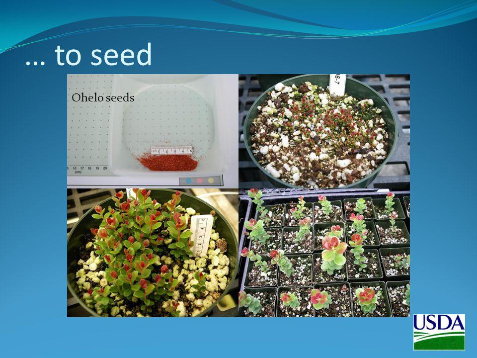 … to seed Ohelo seeds
