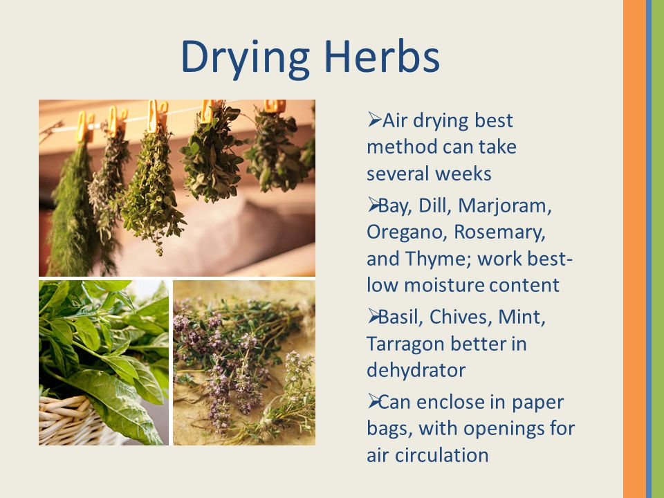 Air drying best method can take several weeks Bay, Dill, Marjoram, Oregano, Rosemary, and Thyme; work best- low moisture content Basil, Chives, Mint, Tarragon better in dehydrator Can enclose in paper bags, with openings for air circulation Drying Herbs