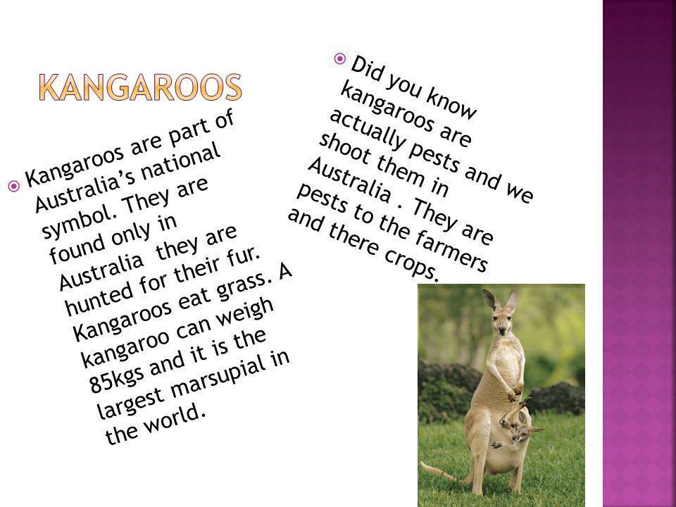 Kangaroos are part of Australias national symbol.