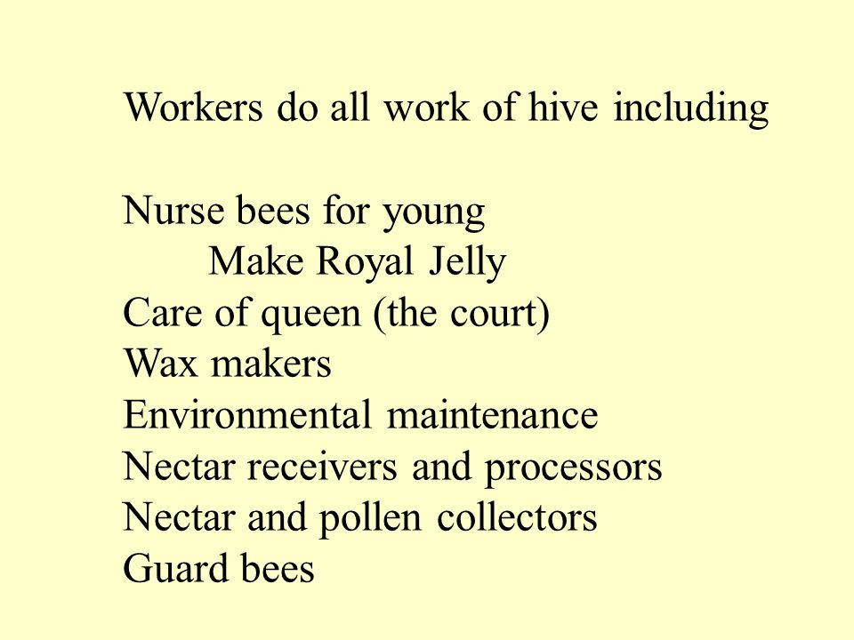 Workers do all work of hive including Nurse bees for young Make Royal Jelly Care of queen (the court) Wax makers Environmental maintenance Nectar receivers and processors Nectar and pollen collectors Guard bees