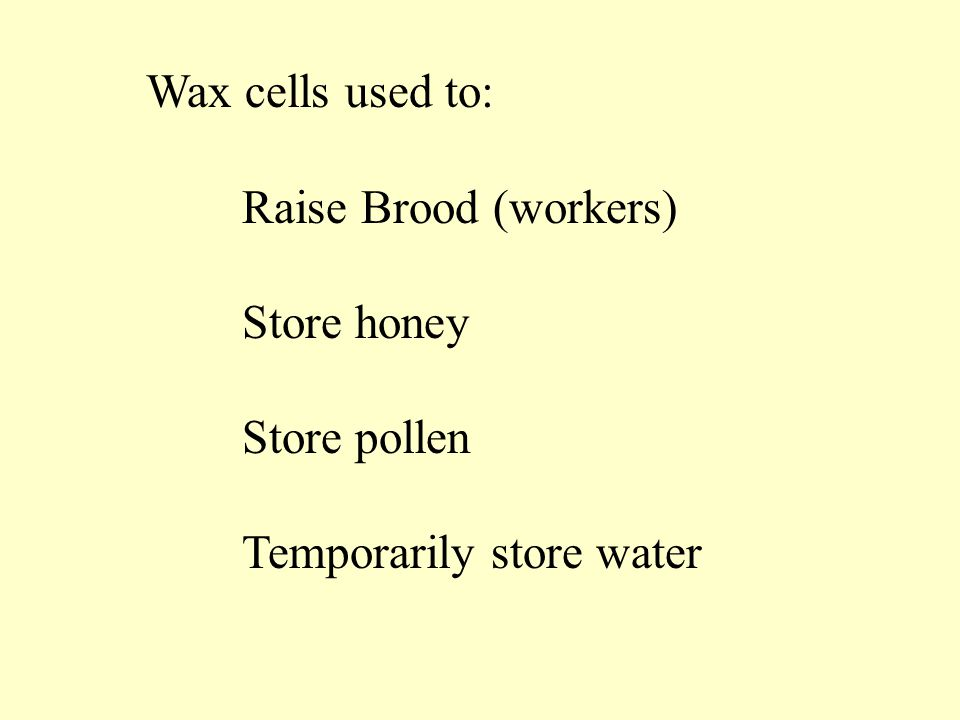 Wax cells used to: Raise Brood (workers) Store honey Store pollen Temporarily store water