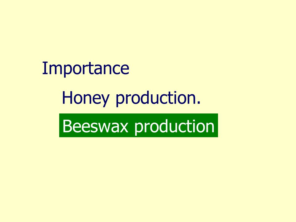 Importance Honey production. Beeswax production