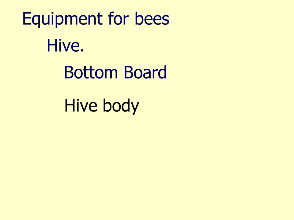 Equipment for bees Hive. Bottom Board Hive body