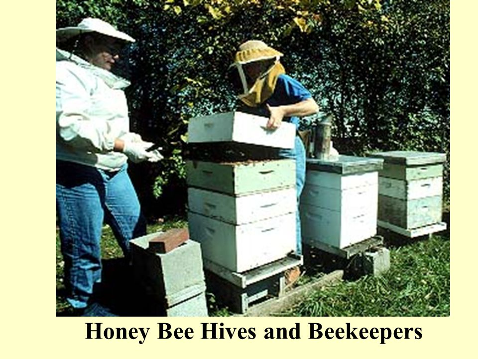 Honey Bee Hives and Beekeepers