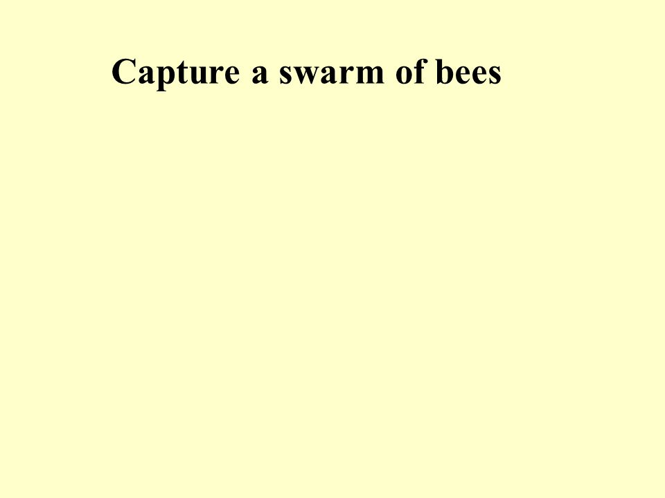 Capture a swarm of bees