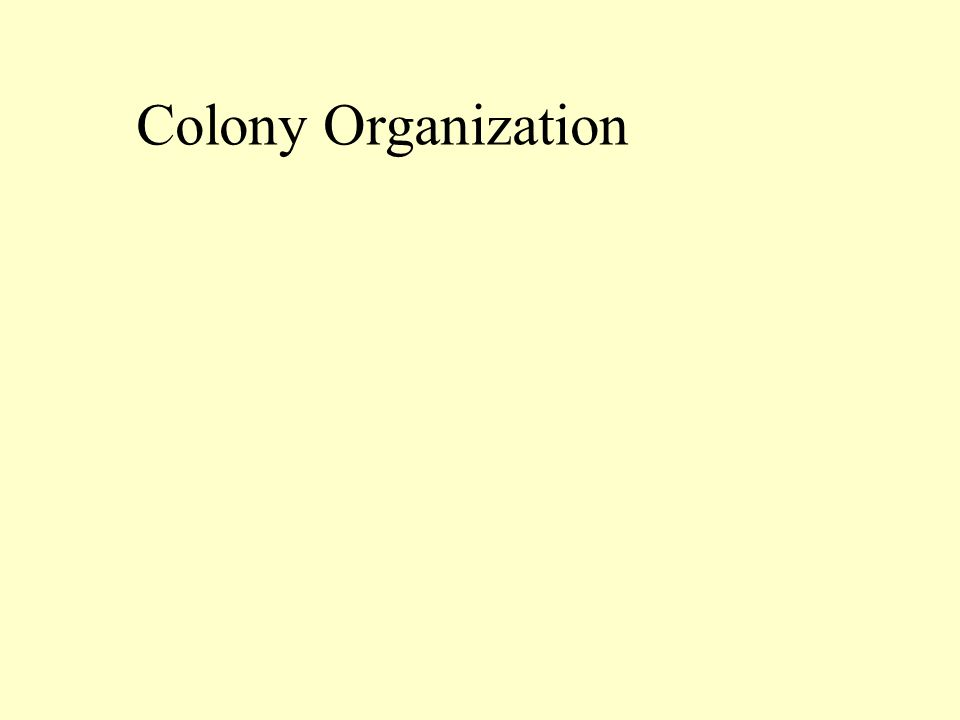 Colony Organization