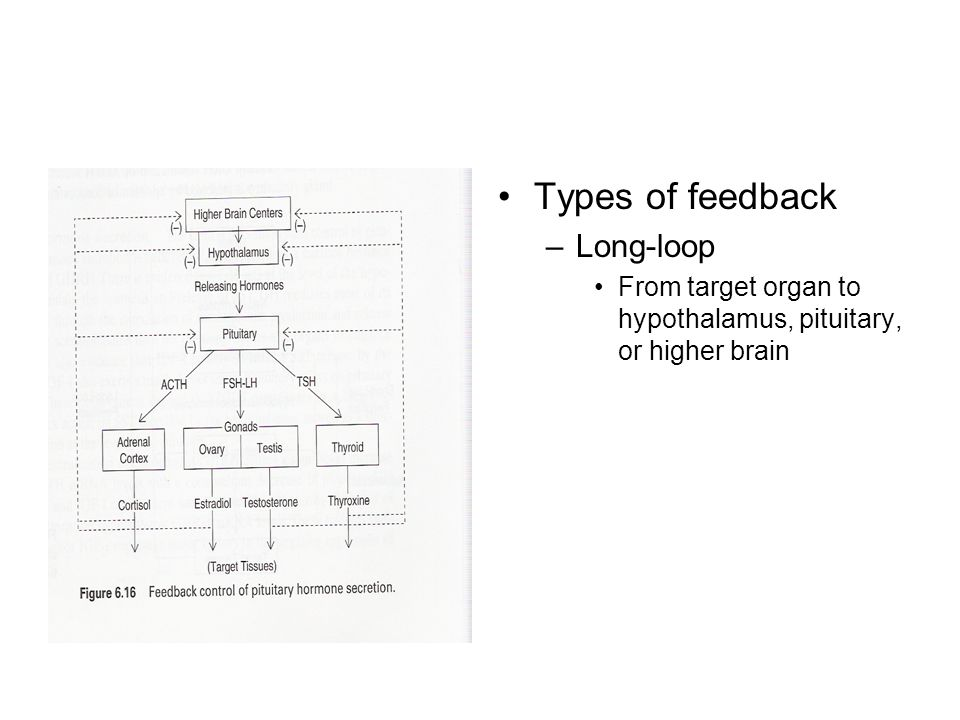 Types of feedback –Long-loop From target organ to hypothalamus, pituitary, or higher brain