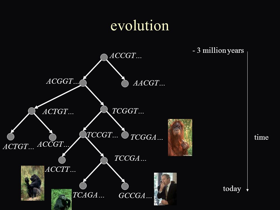 evolution ACCGT… AACGT… ACGGT… ACTGT… TCGGT… ACTGT… ACCGT… TCGGA… TCCGT… TCCGA… ACCTT… TCAGA… GCCGA… time - 3 million years today