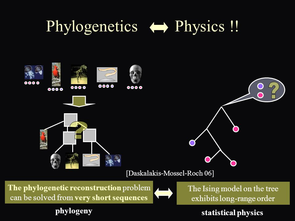 Phylogenetics Physics !.