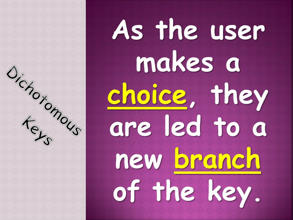 As the user makes a choice, they are led to a new branch of the key.