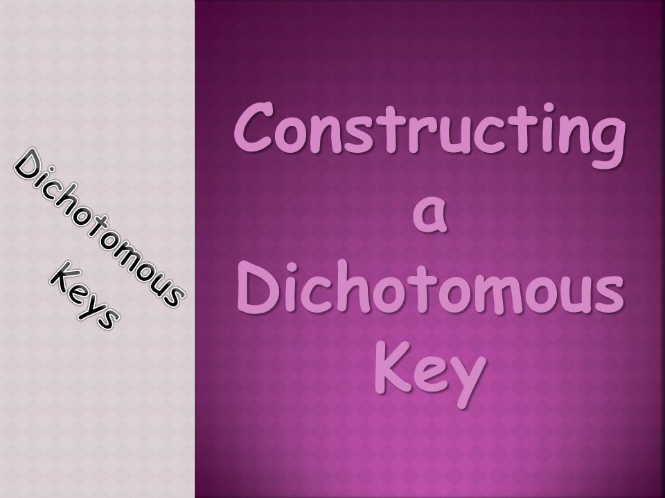 Constructing a Dichotomous Key
