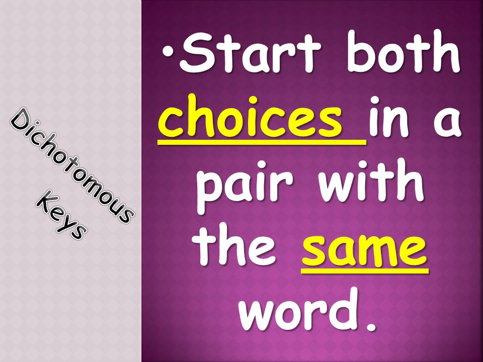 Start both choices in a pair with the same word.Start both choices in a pair with the same word.