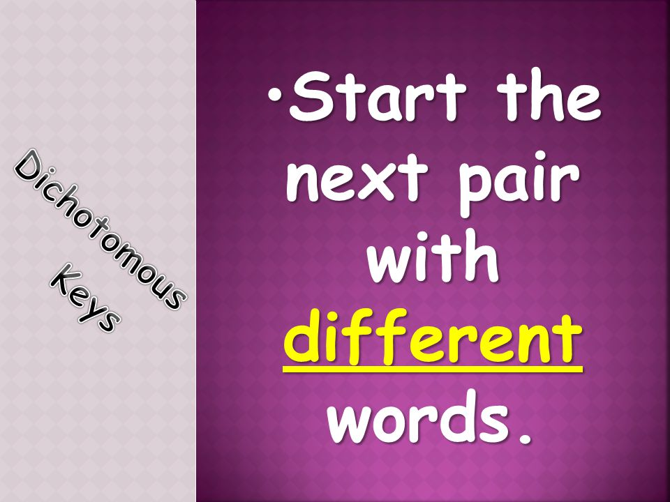 Start the next pairStart the next pair with different words.