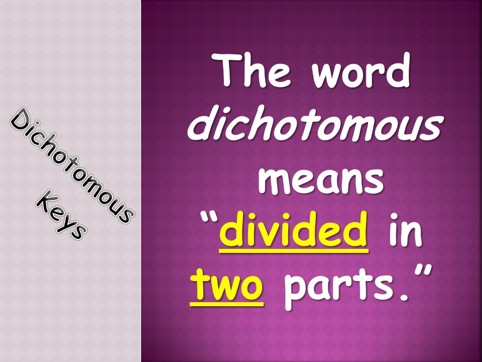 The word dichotomous meansdivided in meansdivided in two parts.