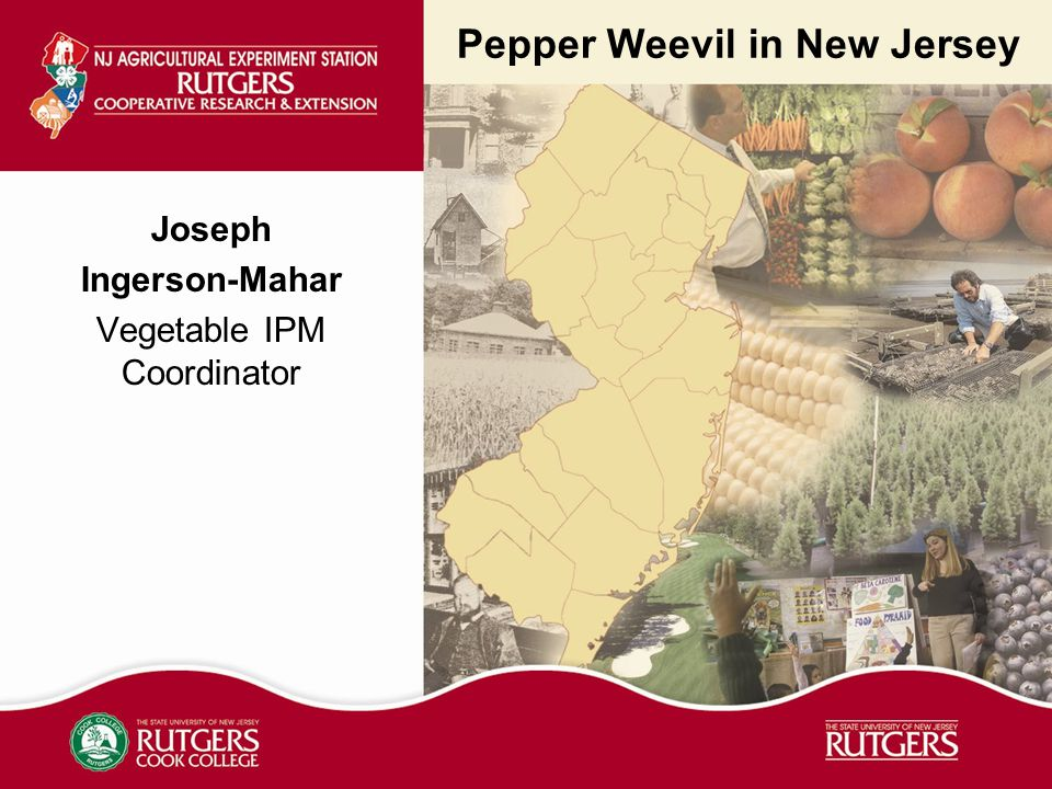 Pepper Weevil in New Jersey Joseph Ingerson-Mahar Vegetable IPM Coordinator
