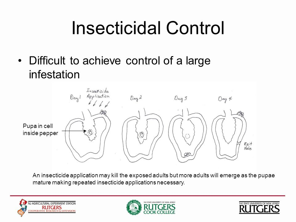 Insecticidal Control Difficult to achieve control of a large infestation An insecticide application may kill the exposed adults but more adults will emerge as the pupae mature making repeated insecticide applications necessary.