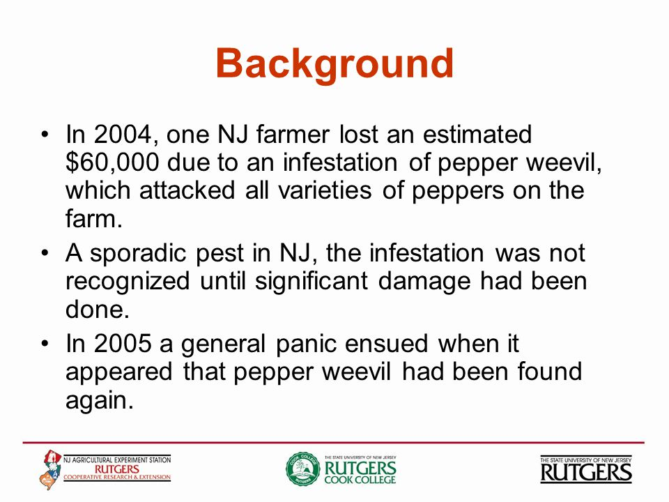 Background In 2004, one NJ farmer lost an estimated $60,000 due to an infestation of pepper weevil, which attacked all varieties of peppers on the farm.