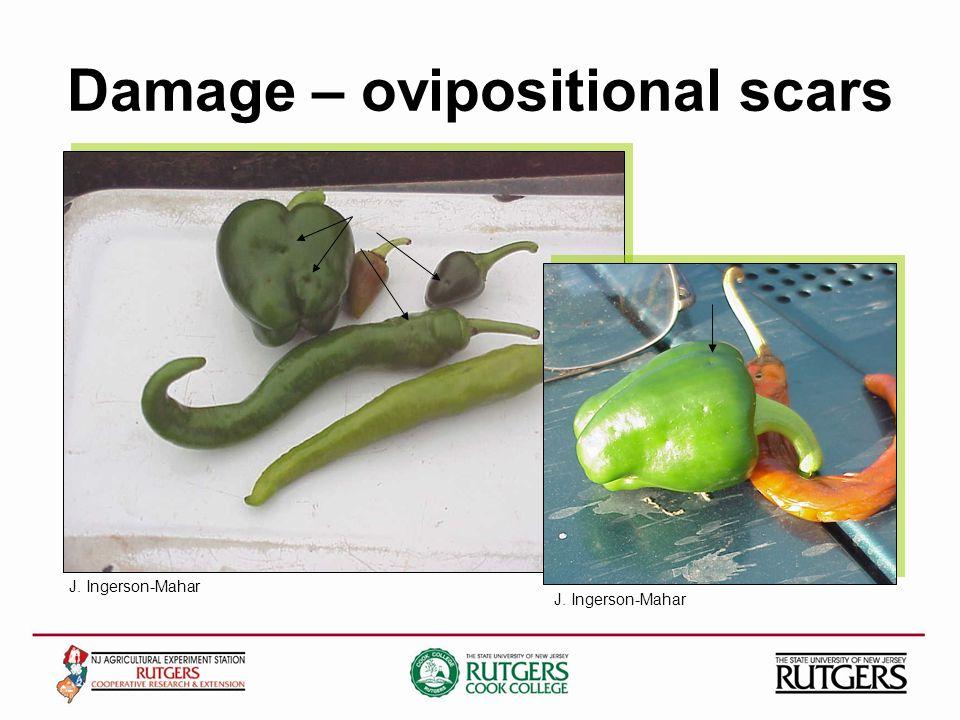 Damage – ovipositional scars J. Ingerson-Mahar