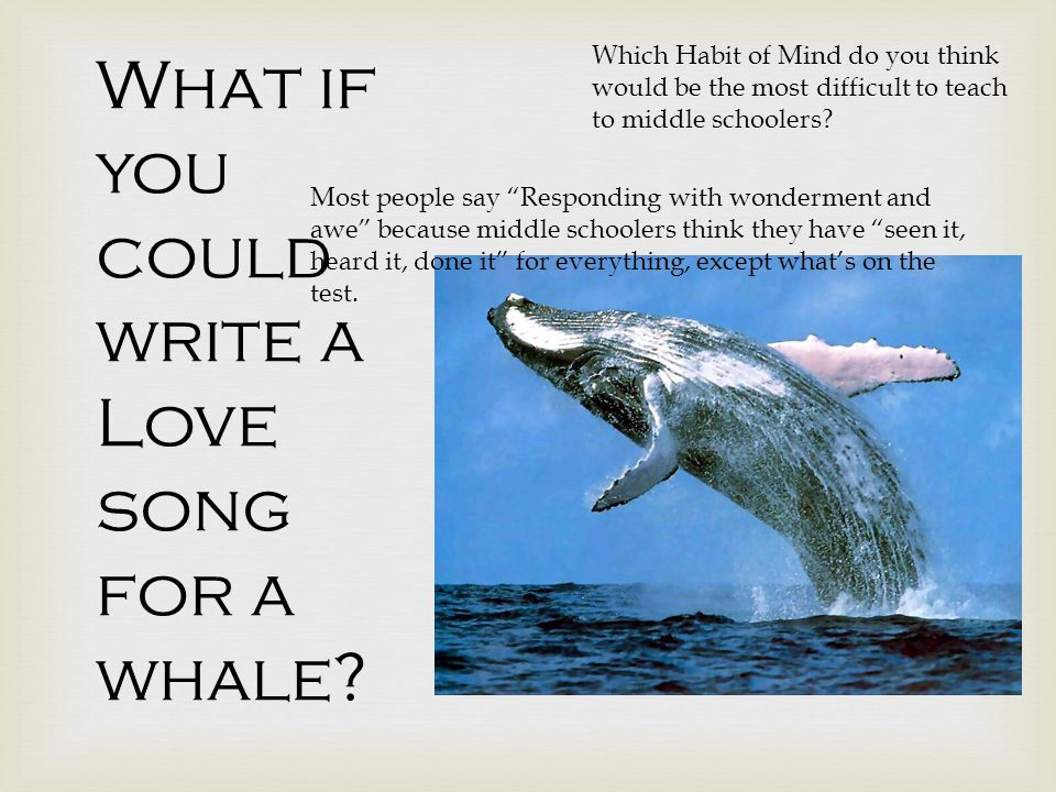 What if you could write a Love song for a whale.