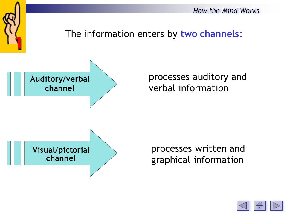 The information enters by two channels: processes auditory and verbal information processes written and graphical information Auditory/verbal channel Visual/pictorial channel How the Mind Works
