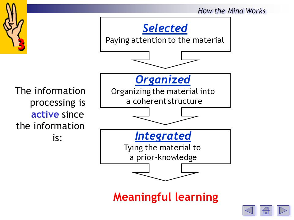 The information processing is active since the information is: Selected Paying attention to the material Organized Organizing the material into a coherent structure Integrated Tying the material to a prior-knowledge Meaningful learning How the Mind Works