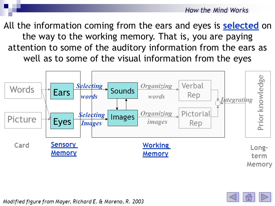 Words Picture Ears Eyes Sounds Images Verbal Rep Pictorial Rep Selecting words Selecting Images Organizing words Organizing images Integrating Card Sensory Memory Working Memory All the information coming from the ears and eyes is selected on the way to the working memory.